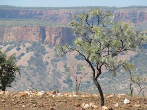 The Ranges in east Kimberley.
