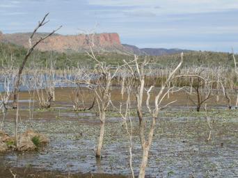 Wetlands in north-east Kimberley.